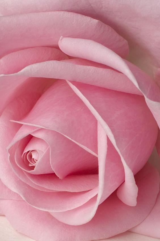 Vintage Shabby Pink!: