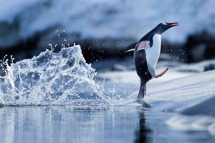 雀,全部都係雀!英攝影師贏得 Bird Photographer of the Year - DCFever.com