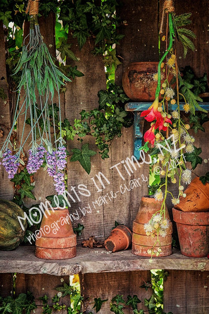 MIT Peter Rabbit Garden Pot Shelf Digital Background | Moments In ...