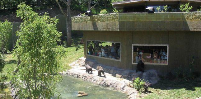 Gorilla Valley - Omaha Zoo