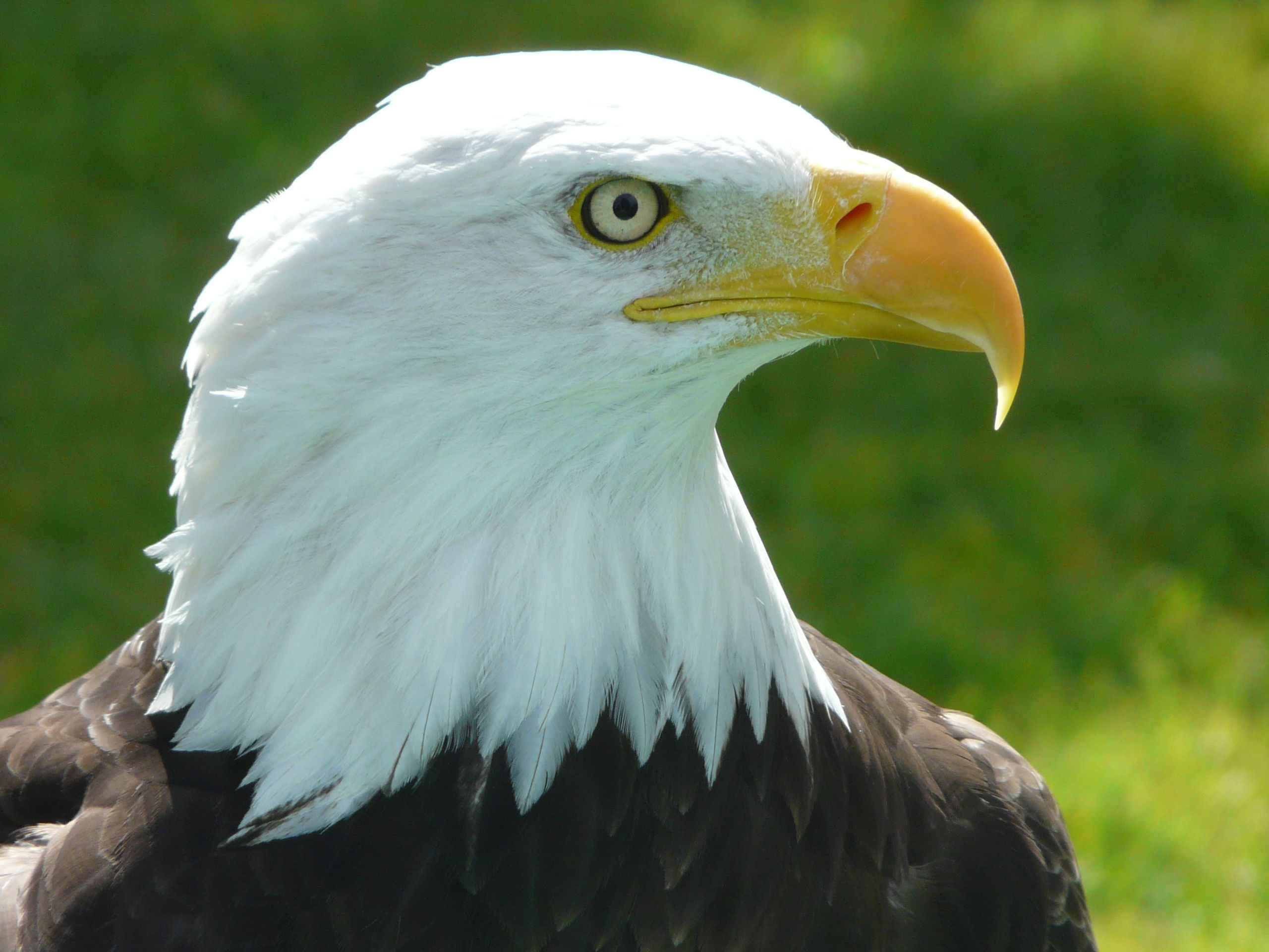 Alberta Birds Of Prey Centre Gets Visitors From All Over The World