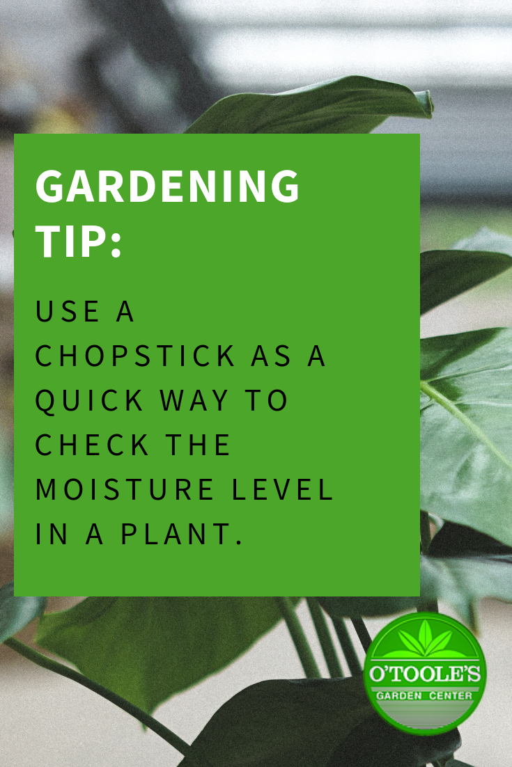 Here S A Great Gardening Tip Use A Chopstick As A Quick Way To Check The Moisture Level In A Plant And See If Gardening Tips Gardening Supplies Garden Center