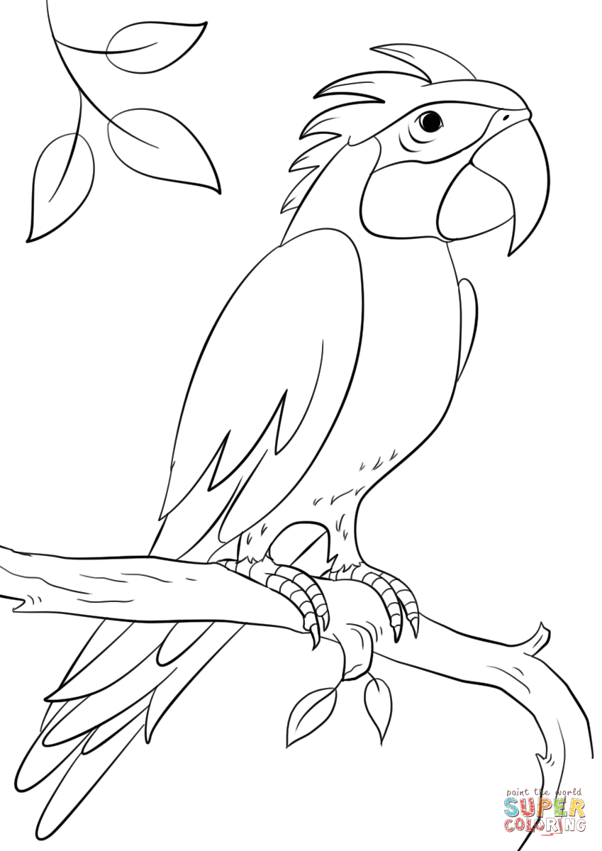 Resultado De Imagem Para Papagaio Para Colorir Drawing Pinterest