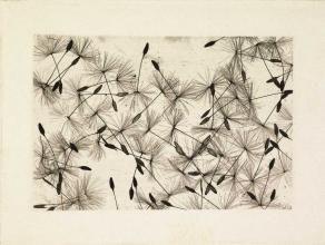 """William Henry Fox Talbot, """"Dandelion Seeds"""" (1840s)"""