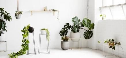 Special Offers - Indoor Plant Stands - In stock & Free Shipping. You can save more money! Check It (July 26 2016 at 01:38PM) >> http://growlightusa.net/indoor-plant-stands/