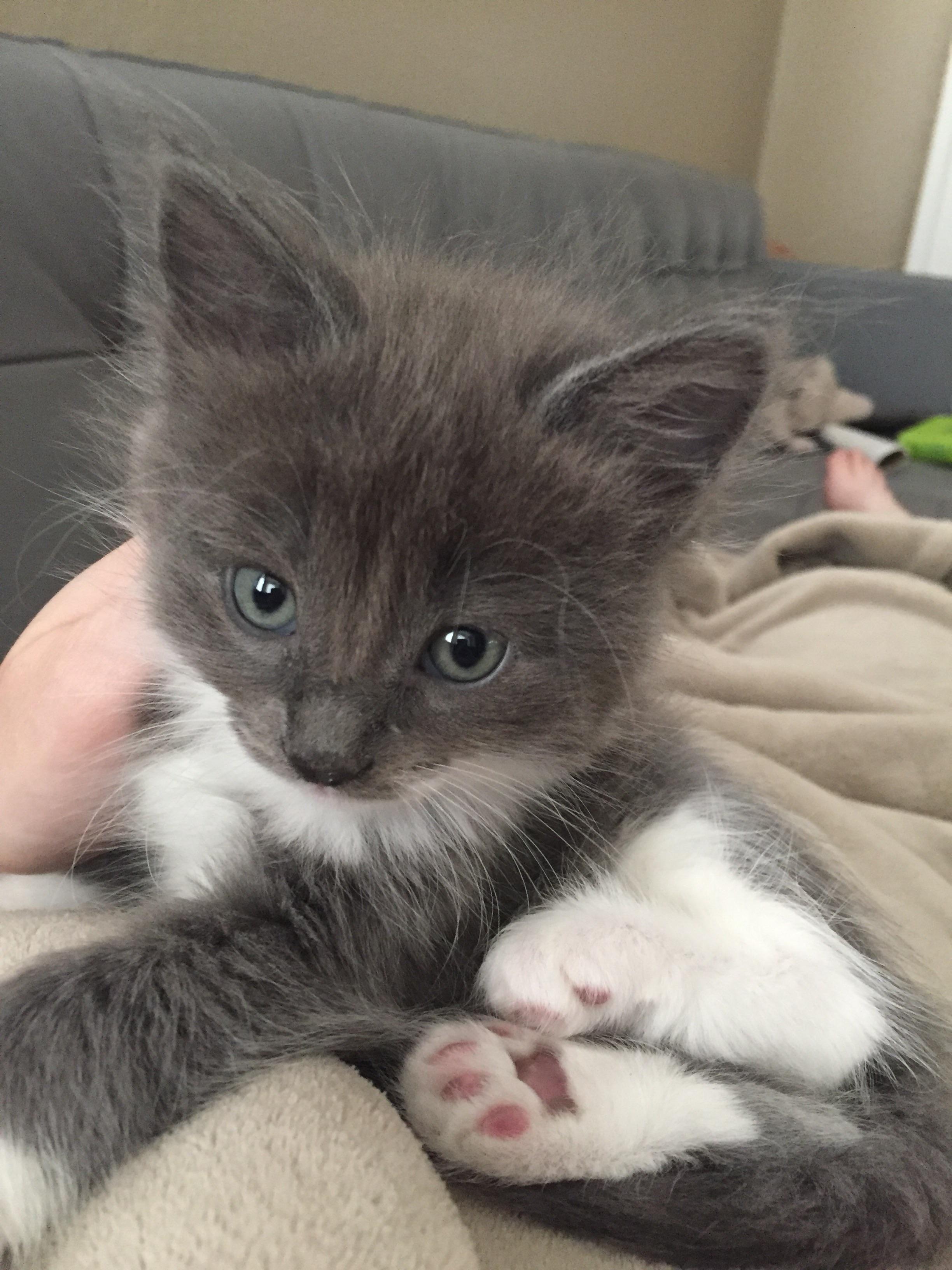 This Is Pretty Boy Pretty Boys Cute Cat Pretty