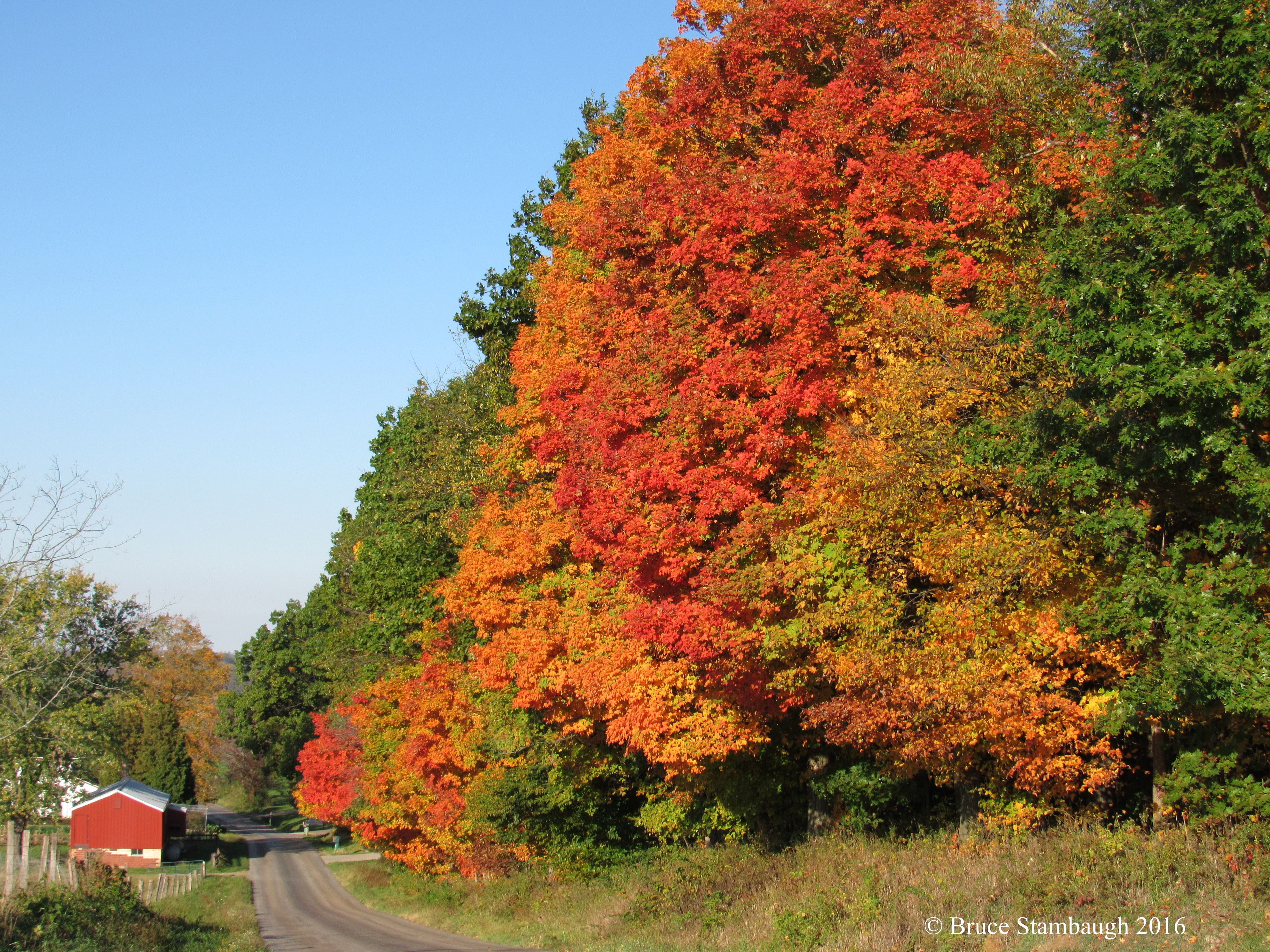 Peak color at home by bruce stambaugh country roads