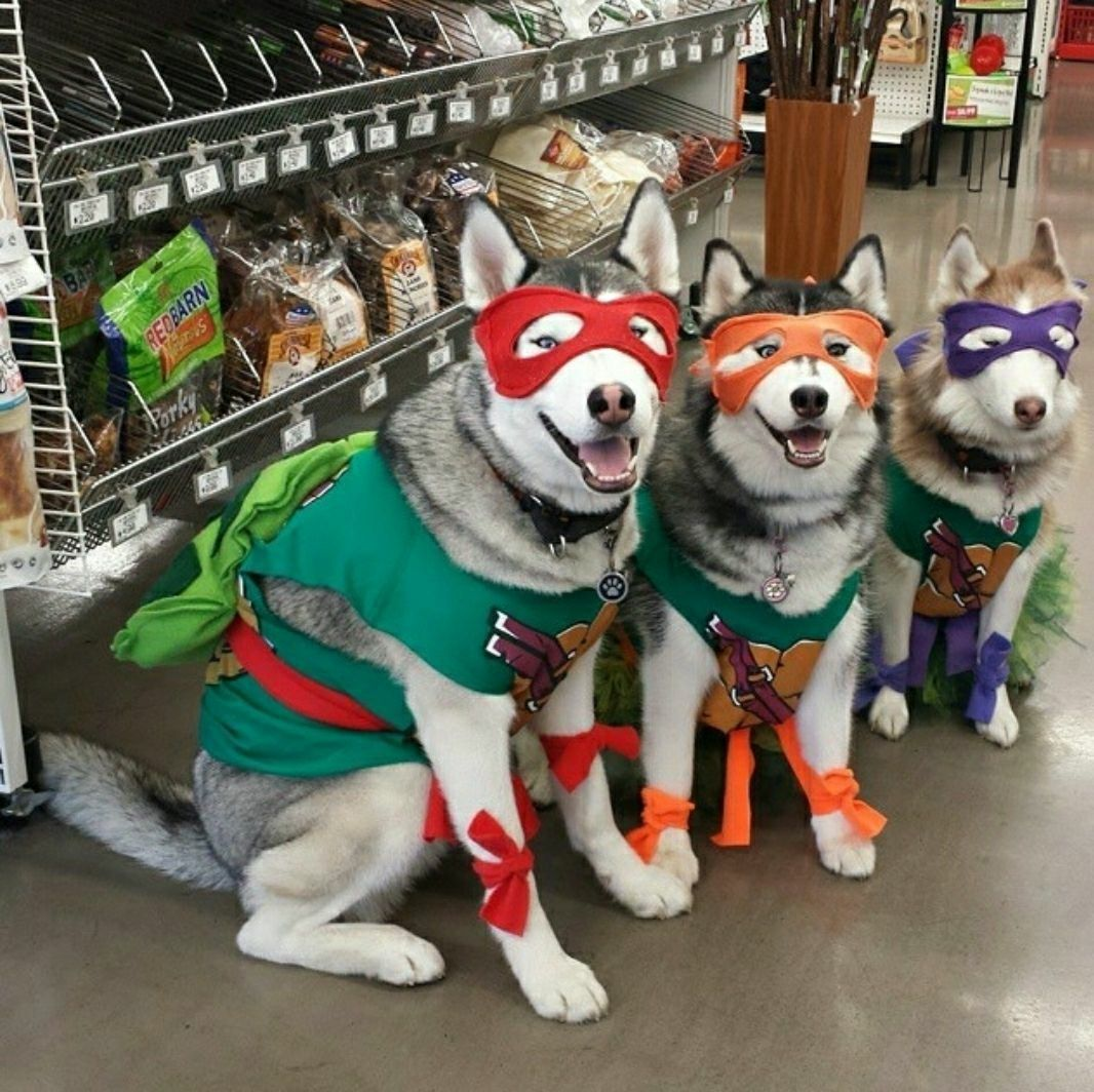 Teenage Mutant Ninja Turtles Halloween Costume for Dogs