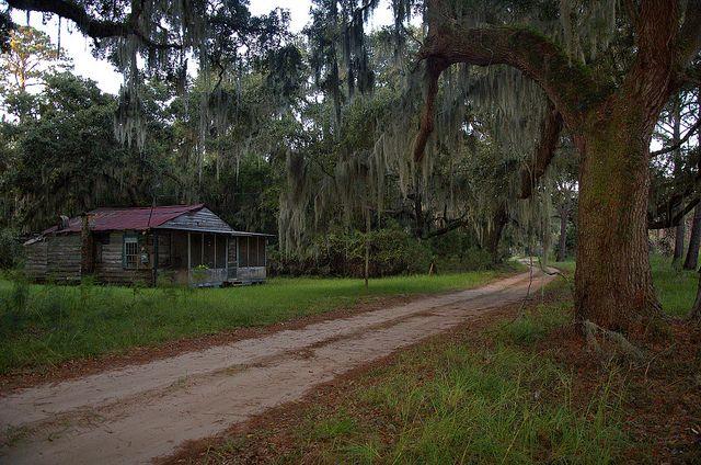 hog hammock in south georgia hog hammock sapelo island   georgia usa georgia and oak tree  rh   pinterest