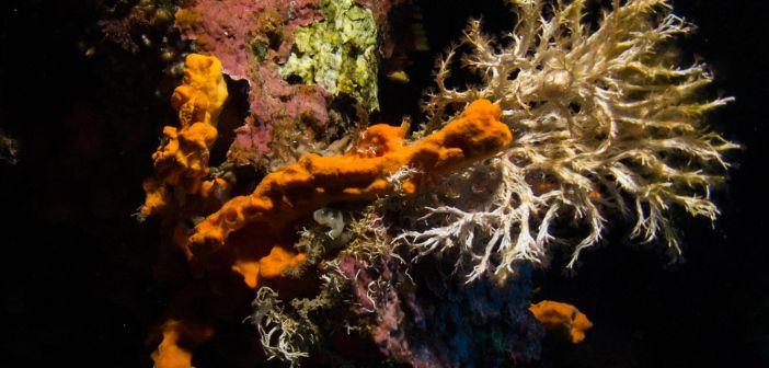 Schnorcheln: Die 6 Best-Kultur-locations der Meerestiefe