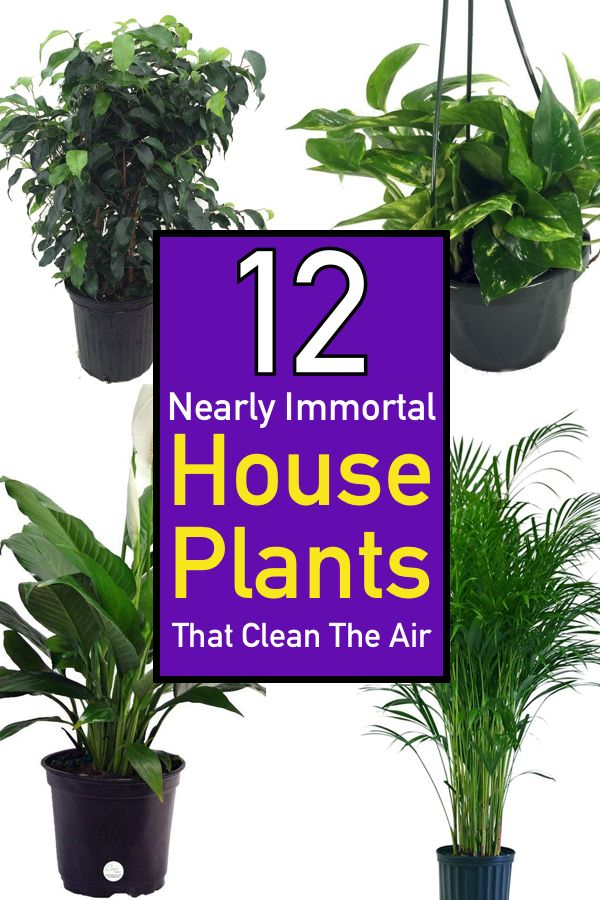 12 Nearly Immortal House Plants That Clean The Air