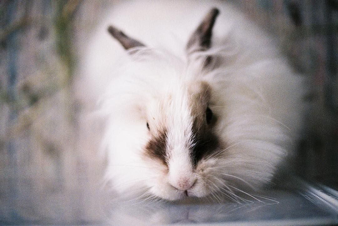 Lil baby girl .....#bunny #bunnylove #bunnystagram #bunnyears #bunnyrabbit #bunnygram #bunnylife #bunnylover #bunnys #bunnyhop #bunnyplay #bunnymom #bunnyboy #bunnycase #bunnybutt #bunnyteeth #bunnydoom #bunnyofig #bunnycake #bunnyaccount #bunnytime #bunnyface #bunnymeyer #bunnyselfie #bunnycute #bunnyflop #bunny🐇 #bunnyday #bunnyfresh #cute_rabbit_world