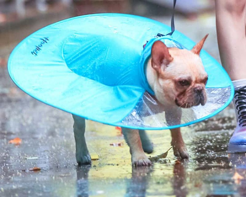 Funny Dog S Waterproof Rain Jacket 2 Colors 5 Sizes French