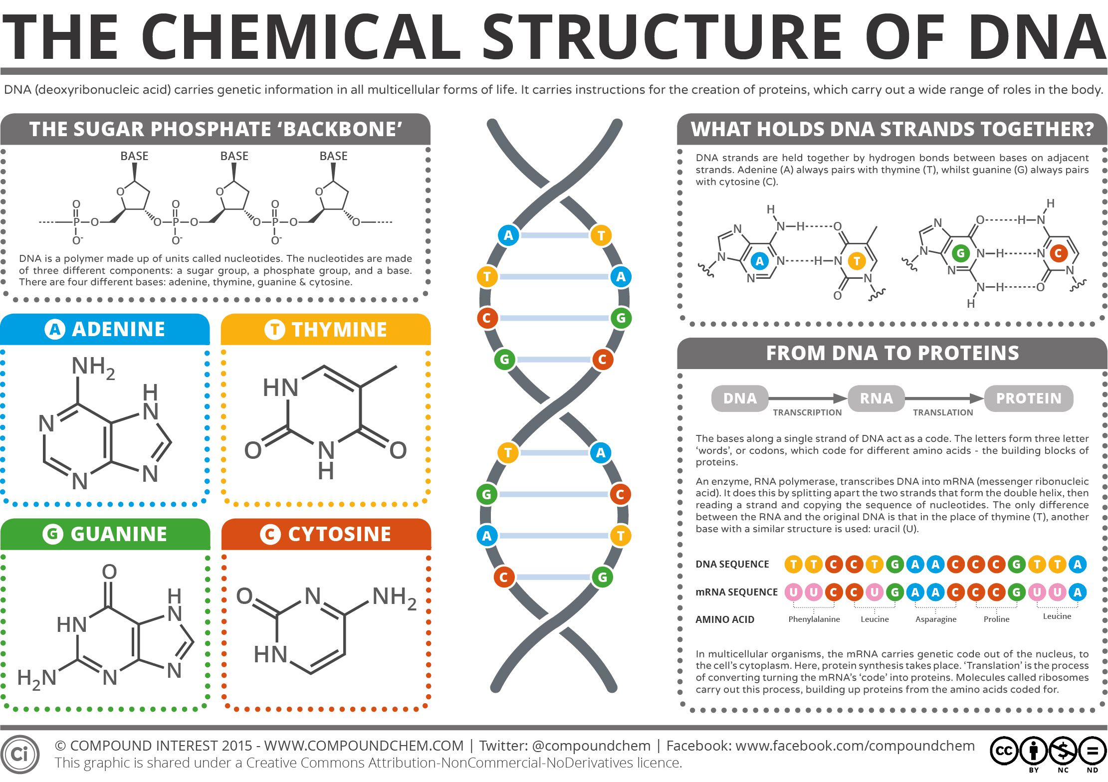 Chemical Structure Of Dna