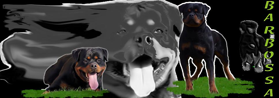 Asta Vom Hause Earnest Rottweiler Female In Georgia