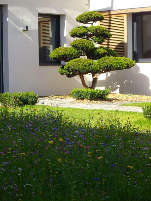 taxus sculpt taille en nuages niwaki paysagiste. Black Bedroom Furniture Sets. Home Design Ideas