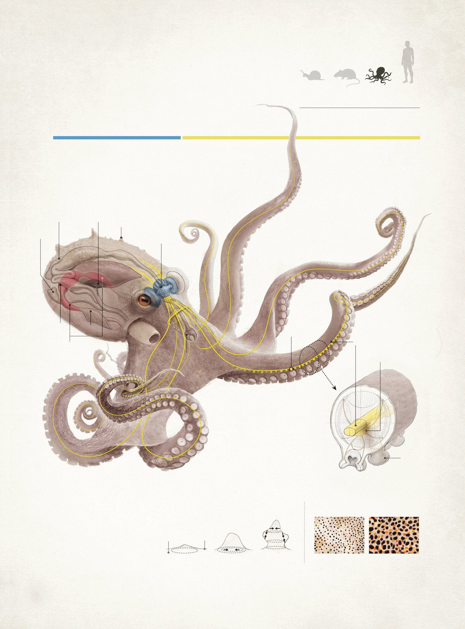 Marilyn Terrell on | SciViz | Pinterest | Anatomy