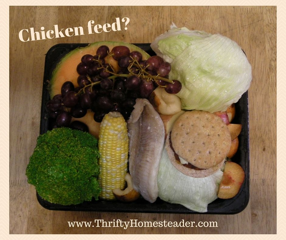 How To Feed Your Chickens With Perishable Food What To Healthy