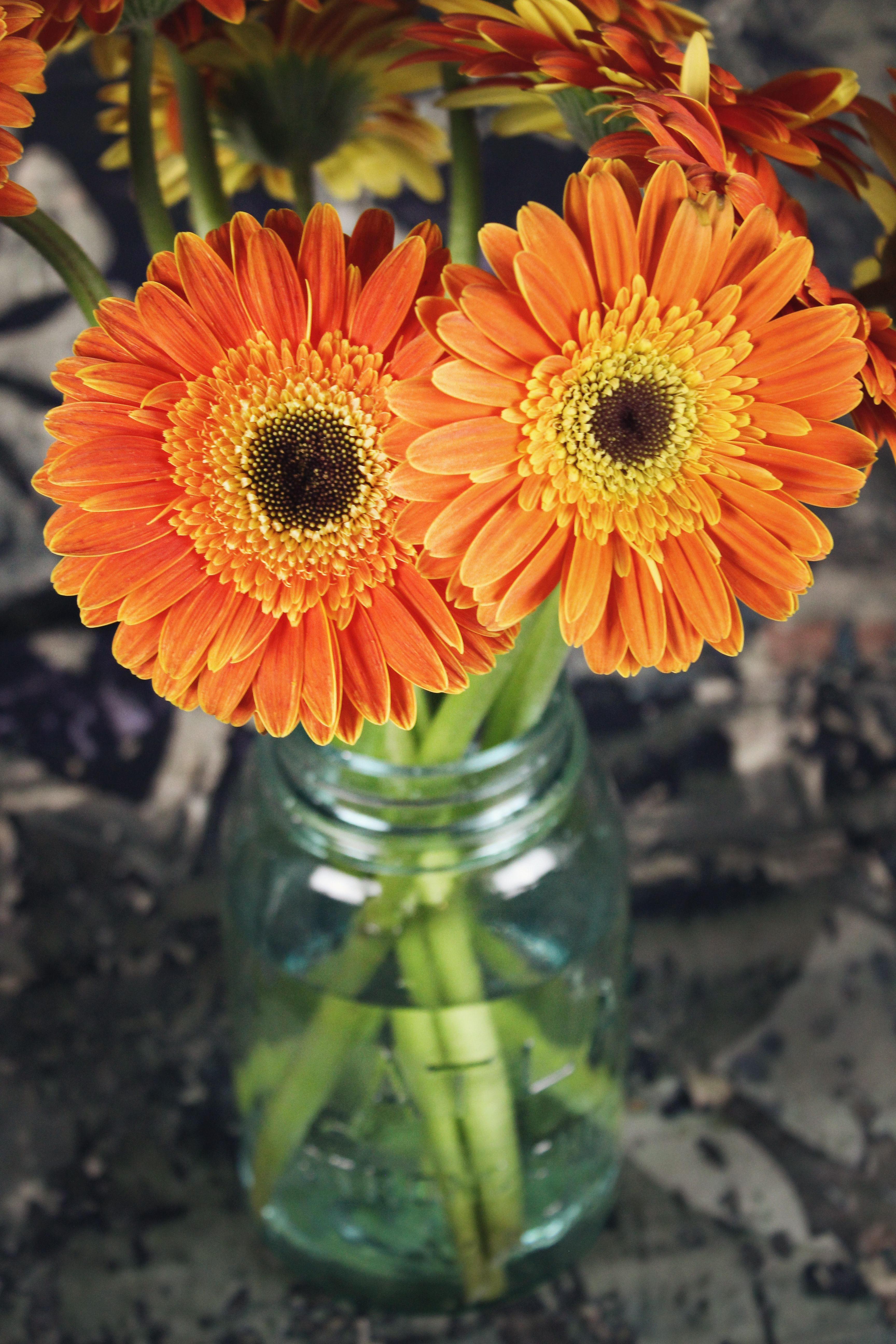 Gerbera Flower Bouquets In 2020 Plants With Pink Flowers Gerbera Flower Gerbera Daisy Bouquet