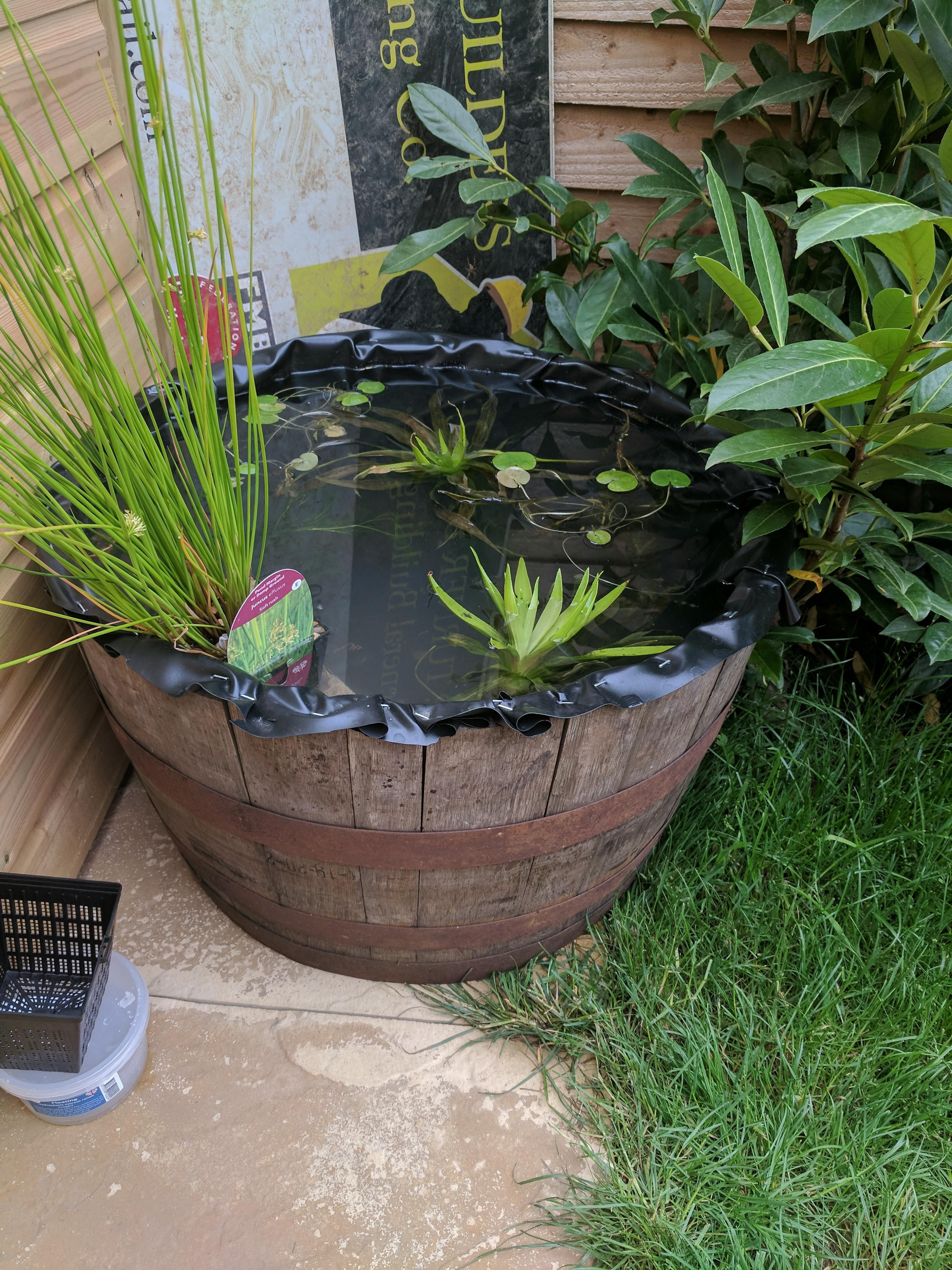 Making small raised pond not sure how to give access to ... on Raised Garden Ponds Ideas id=90786