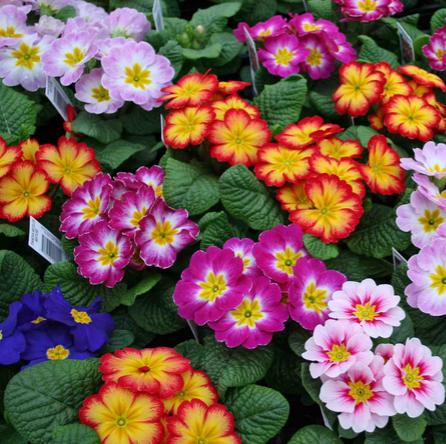 Plantas Para El Invierno Resistentes Al Frío Ecoagricultorcom
