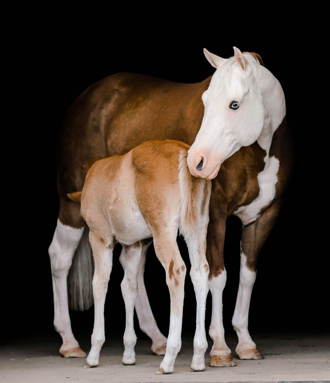 Courses Kirstie Marie Photography Mentorship Pretty Horses Most Beautiful Horses Baby Horses [ 2326 x 2000 Pixel ]