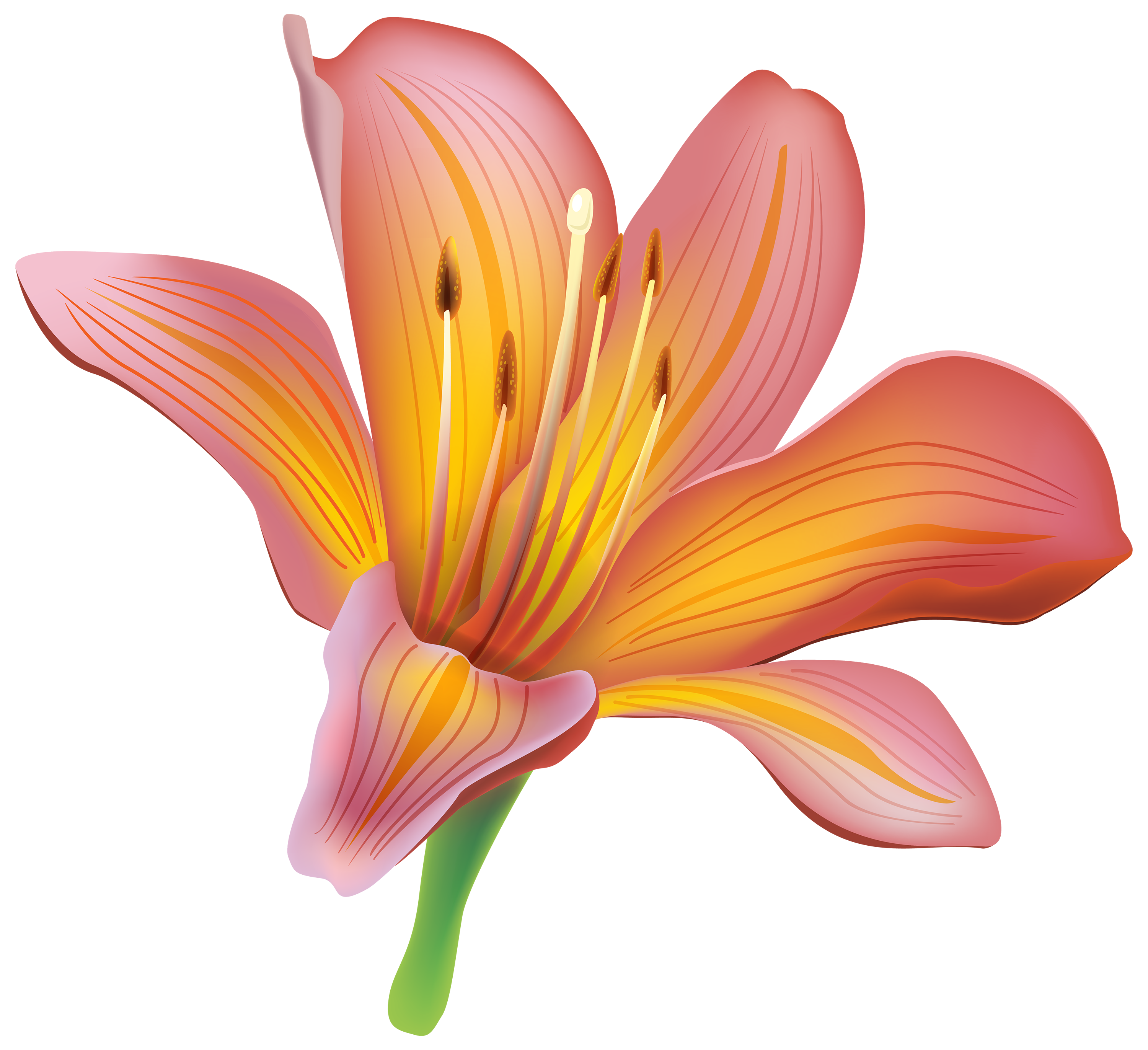 Lily Flower PNG Clipart Flower painting, Lily flower
