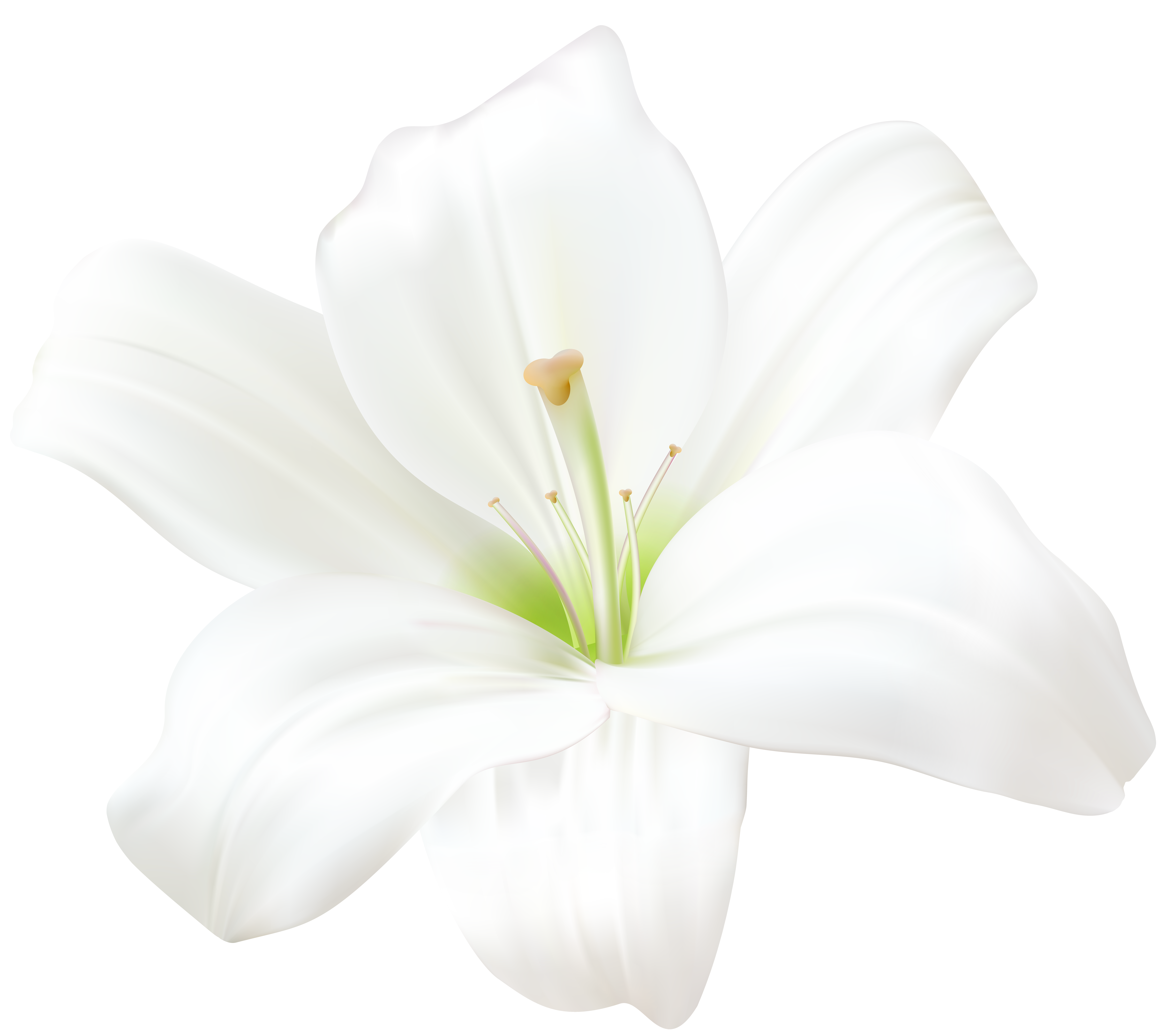 White Lily Png Clip Art Image Gallery Yopriceville High Quality Images And Transparent Png Free Clipart White Lilies Lily Painting Flower Sketches