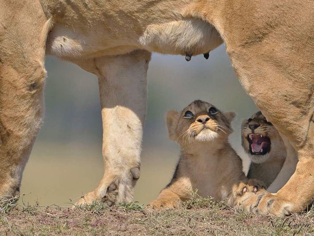 Neal Cooper Animals wild, Wild animals photos, Animal
