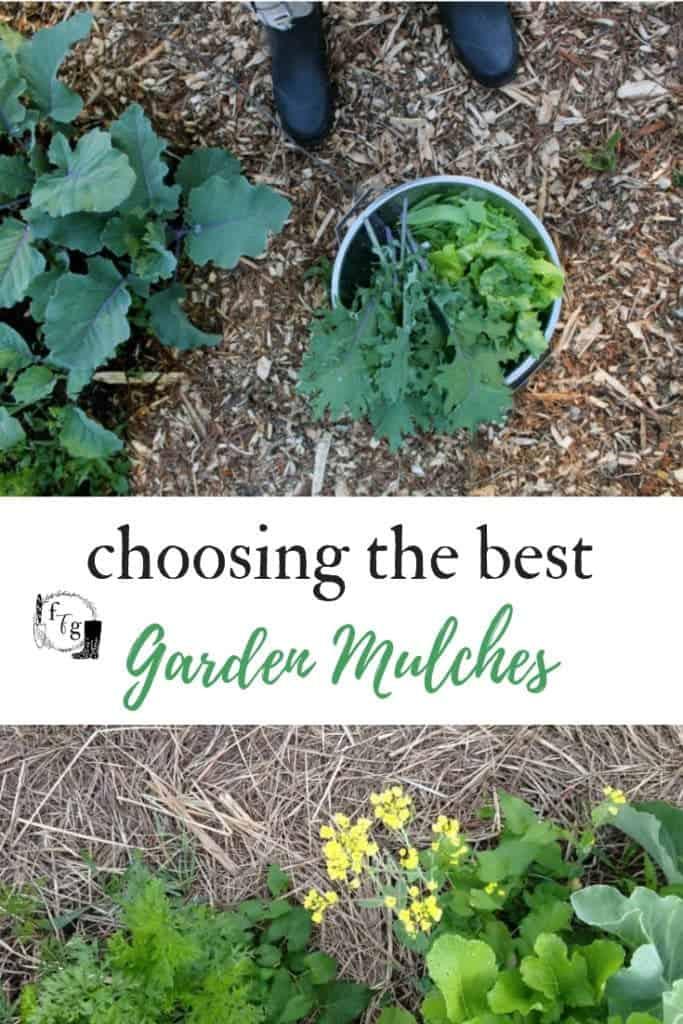 Best Garden Mulches Comparing Straw Vs Hay Vs Wood Chips Family Food Garden In 2020 Garden Mulch Organic Vegetable Garden Food Garden