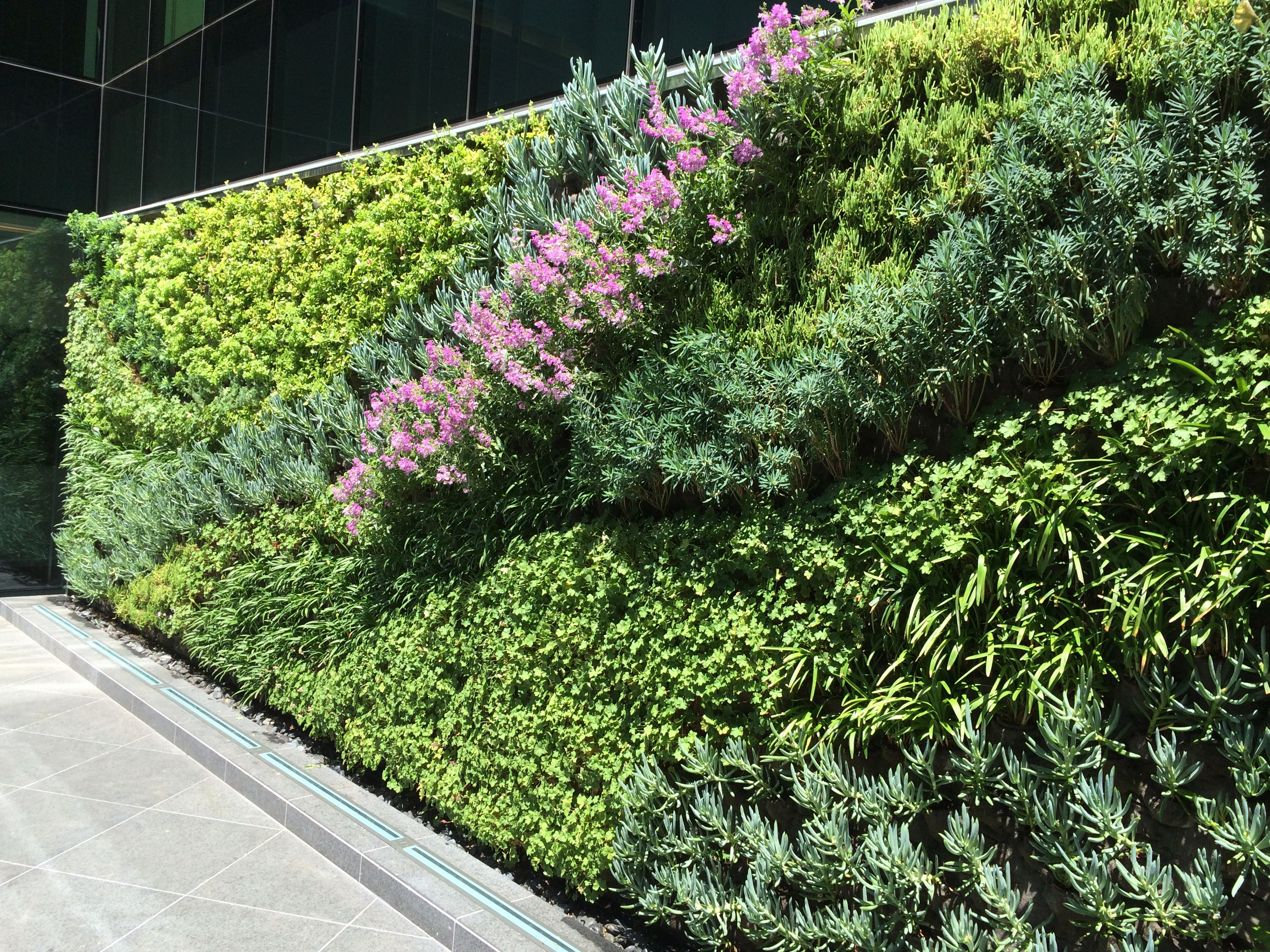 Superb Living Wall, Green Wall, Vertical Garden, Los Angeles, Beverly Hills,  Kennedy