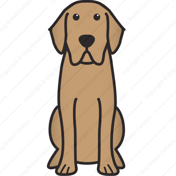 Labrador Retriever Labrador Retriever Puppies Labrador Retriever Dog Labrador Retriever
