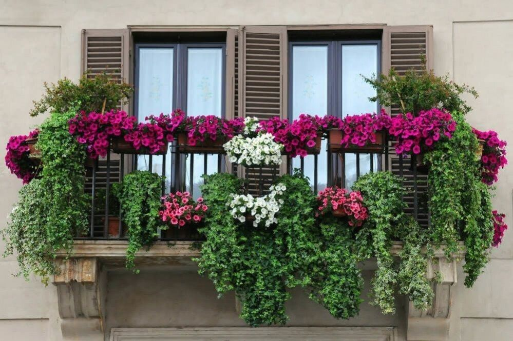 Magnificent Balcony Filled With Many Flower Boxes Containing Pink White And Fuchsia Coloured Flowers Balcony Flower Box Balcony Flowers Balcony Plants