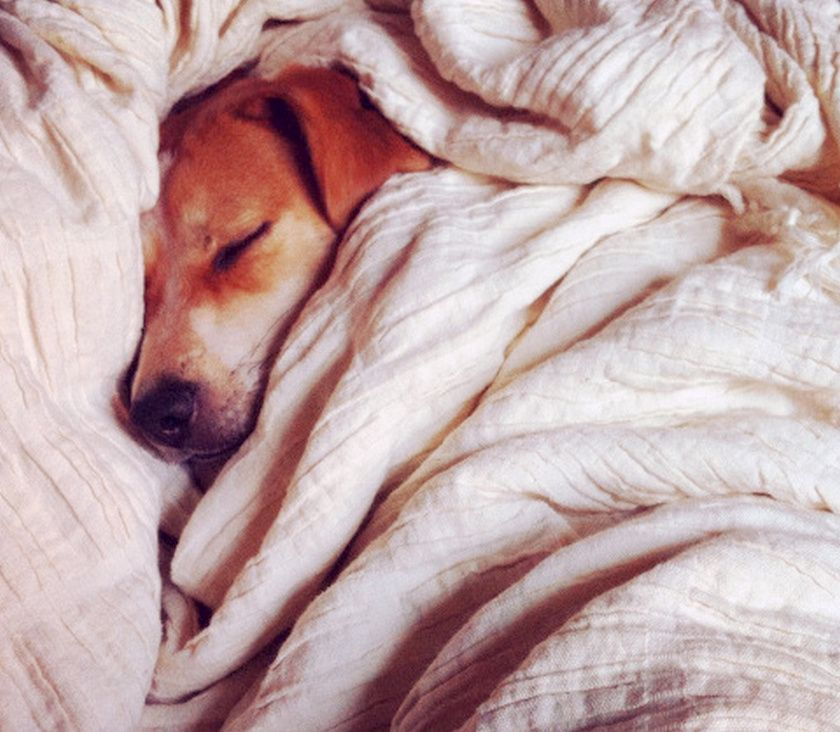 4 Totally Normal Explanations For Your Dog S Bizarre Sleeping