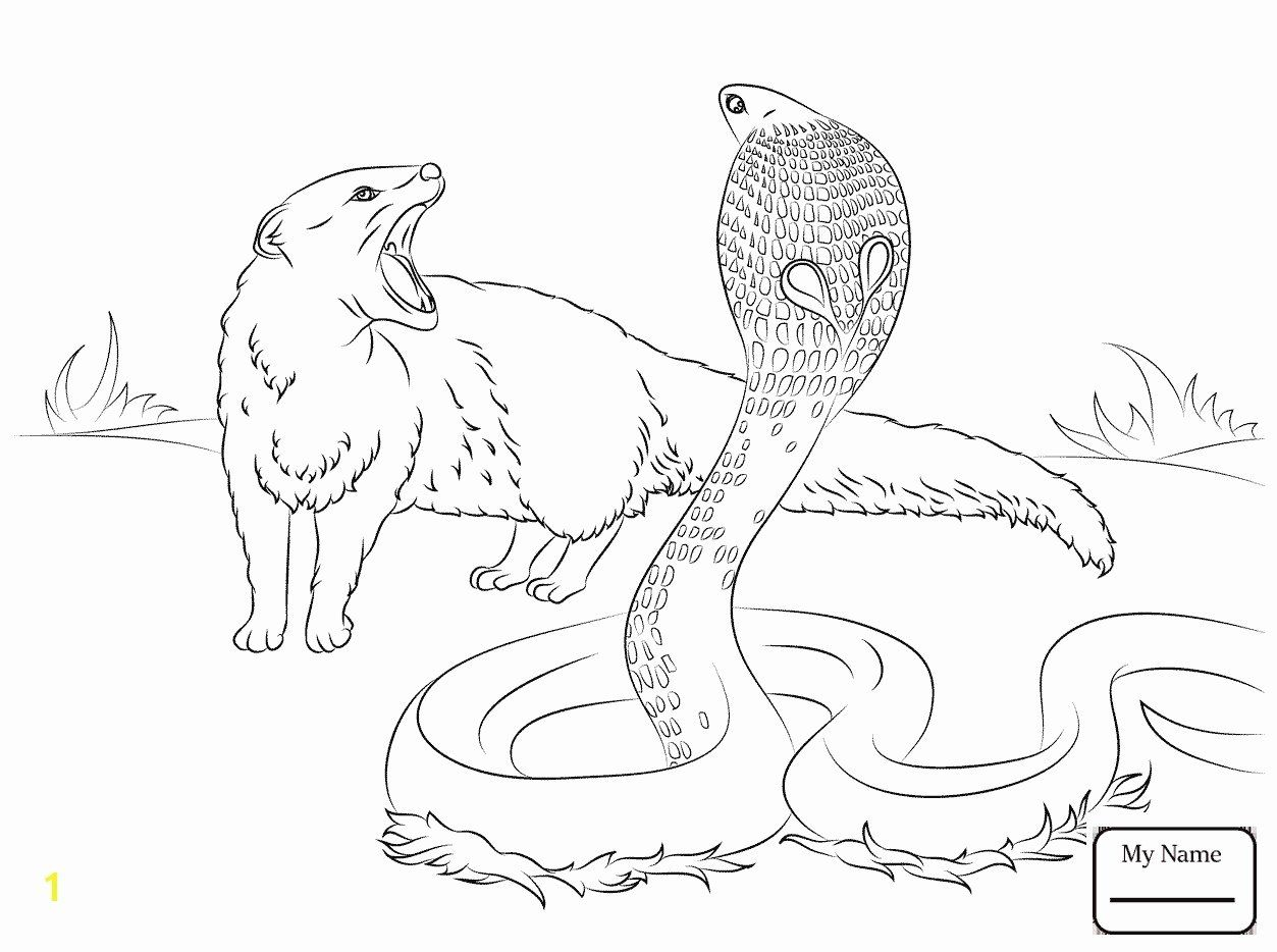 Coloring With Animals Lovely Elegant Cute Baby Sea Animal Coloring Pages Kursknews Snake Coloring Pages Zoo Animal Coloring Pages Owl Coloring Pages