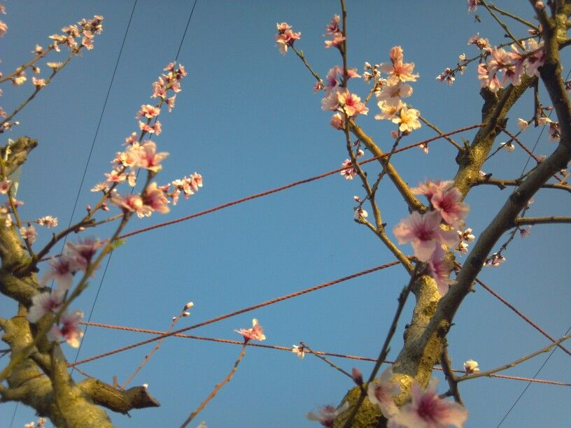 Blossoms in the sky
