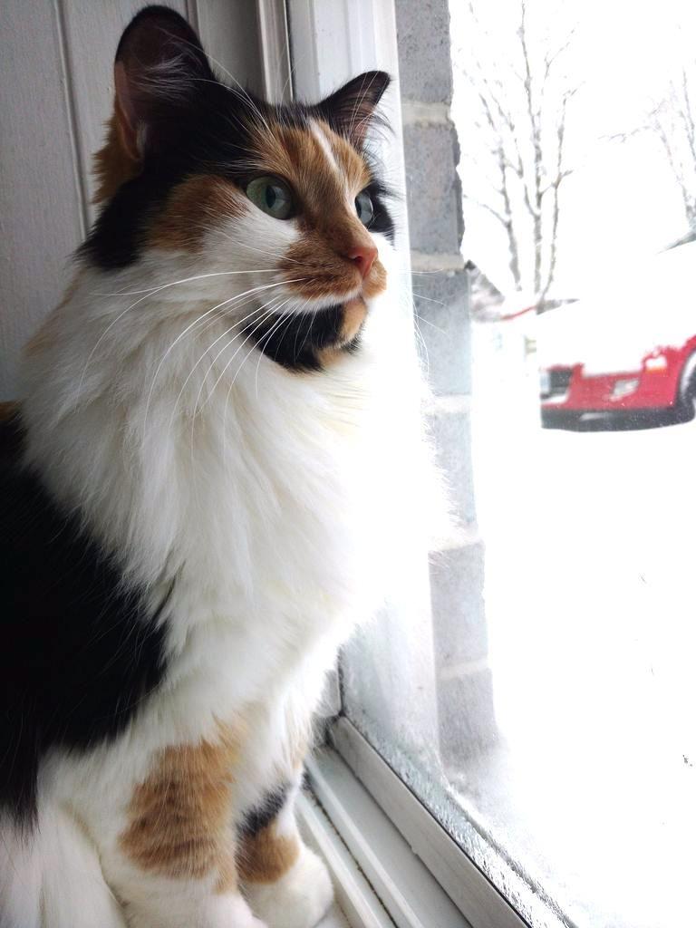 My Mom Has The Prettiest Cat Reddit Meet Pepper Pretty Cats Cute Little Animals Cats