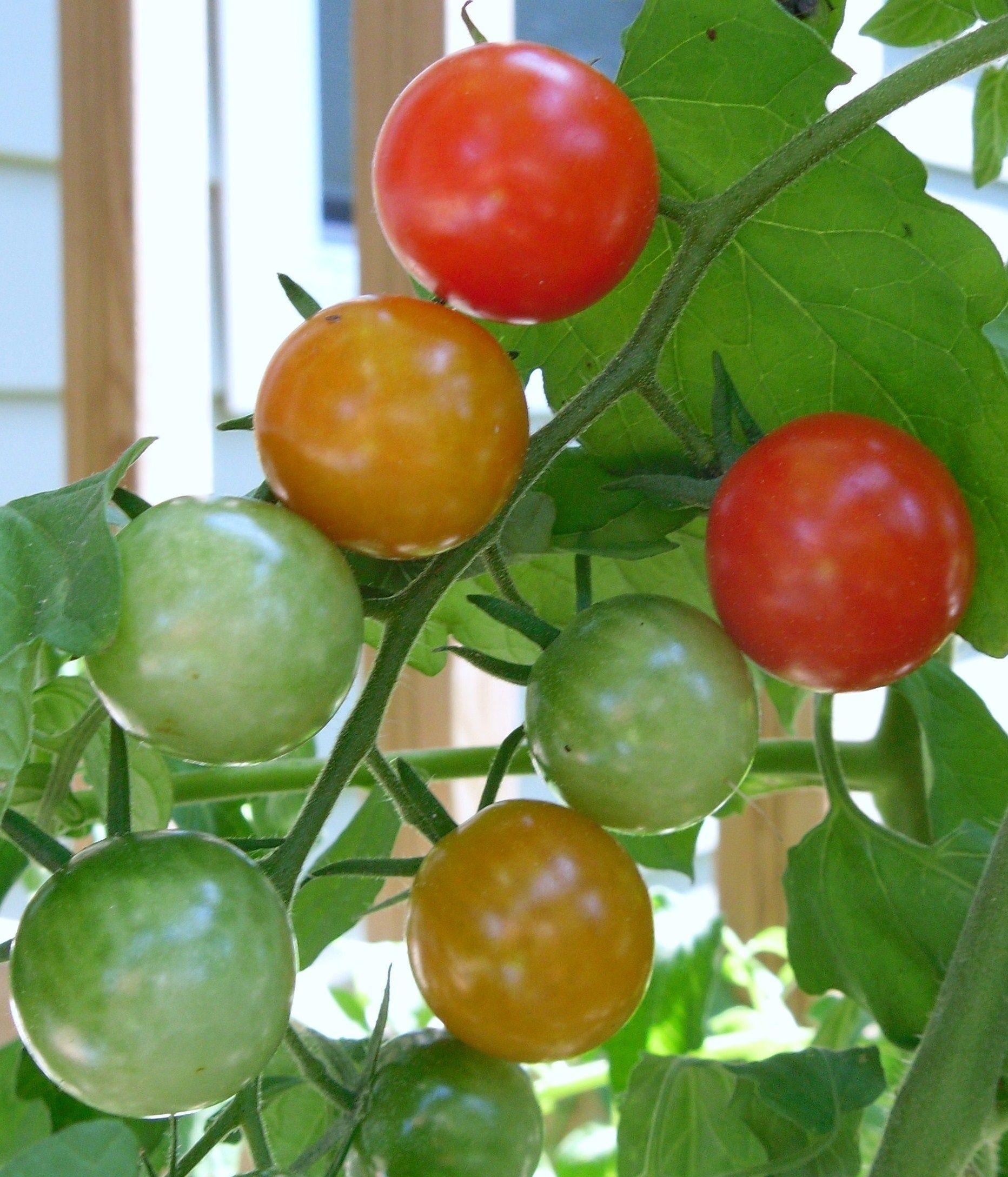 Resultado de imagem para love fresh tomatoes