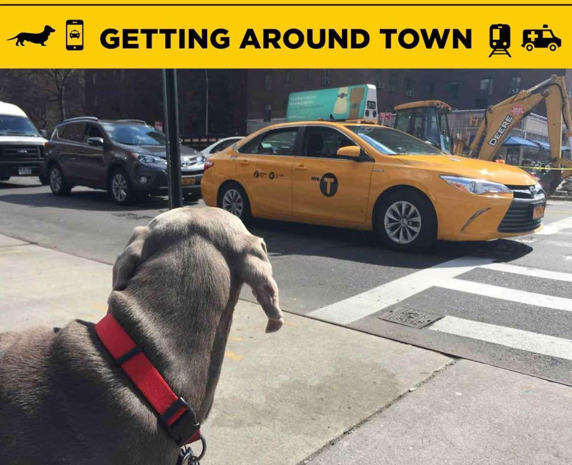 Pet transportation NYC Urban dog, Nyc dogs, Dog travel