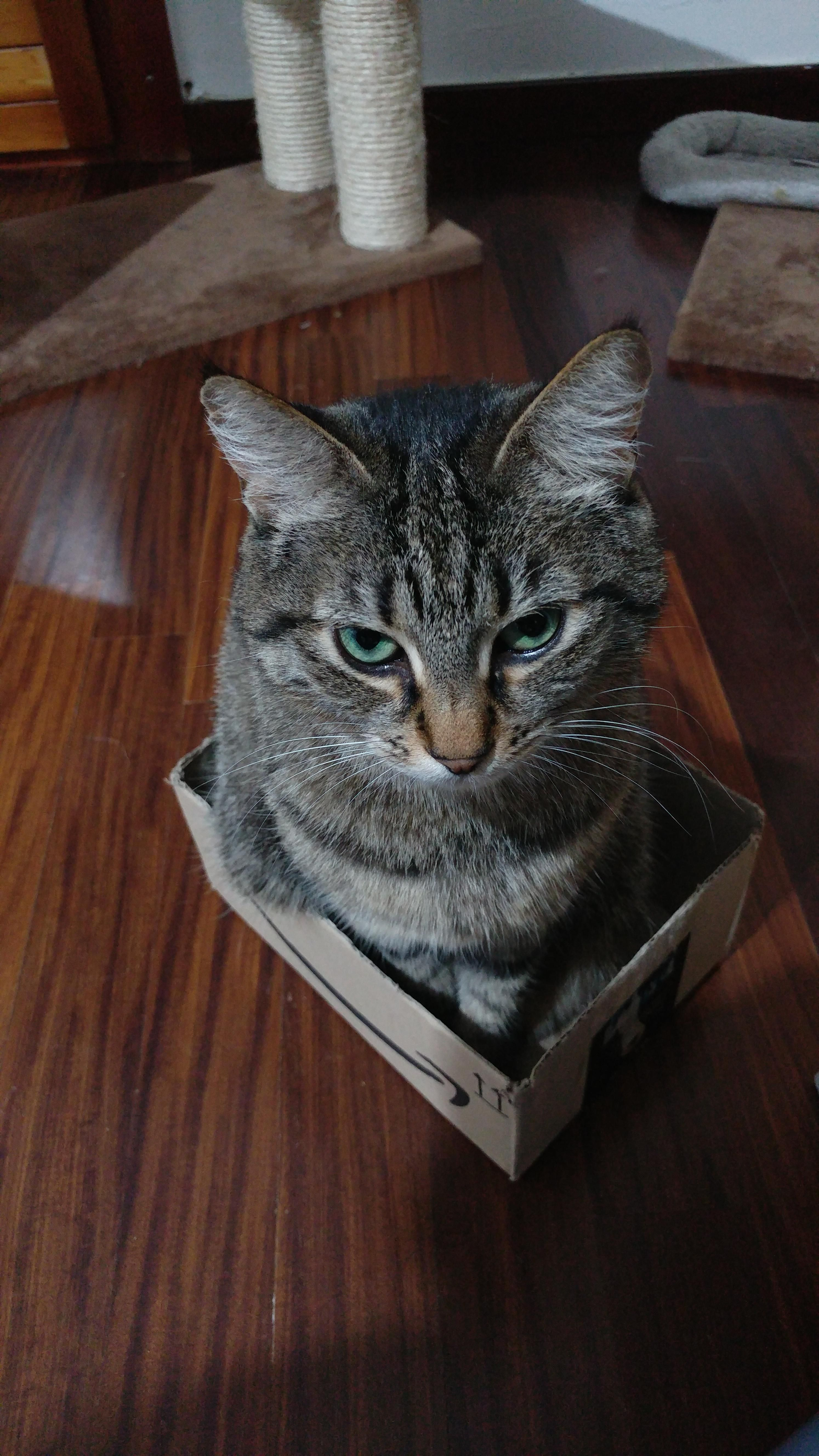Mika is angry I gave her such a small box Cat pictures