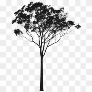 Eucalyptus Or Gum Silhouette Australia Pinterest Australian Tree Silhouette Png Transparent Png Australian Trees Tree Silhouette Pine Tree Silhouette