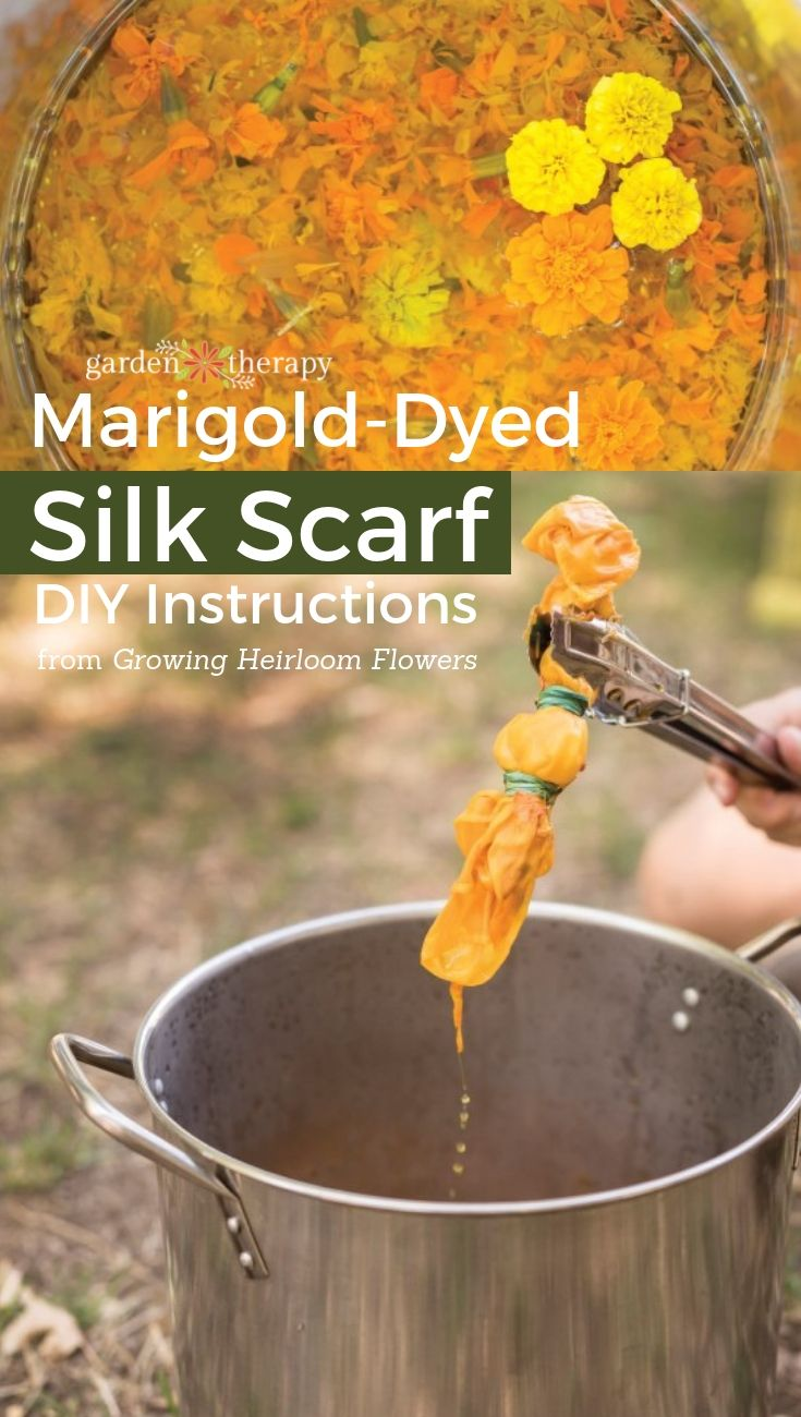Marigold-Dyed Silk Scarf- Natural dyes are fun to work with and can create a myriad of vibrant colors. If you have never made your own botanical dye before, this is a great first project to try because it is super simple, quick, and the results are beautiful! Follow this step by step tutorial to create your own  marigold-dyed silk scarf. #gardentherapy #dyefabric #naturaldye #textiles #marigold
