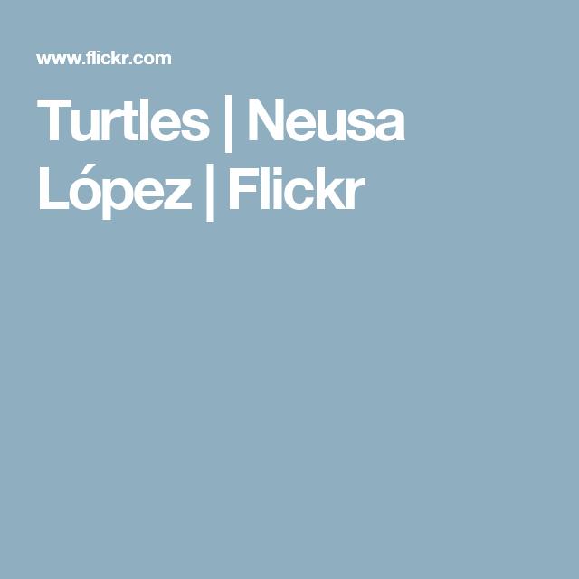 Turtles | Neusa López | Flickr
