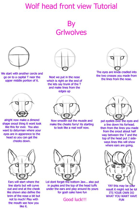 Wolf Head Front View Tutorial By Grlwolves On Deviantart Drawing Tutorial Face Drawing Tutorial Sketch Book
