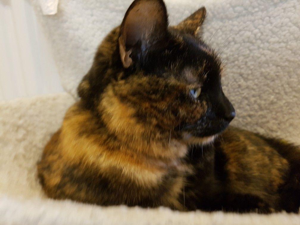 Pin By Pamela Knowlton On Baba Vanga Calico Cat Cats Kittens