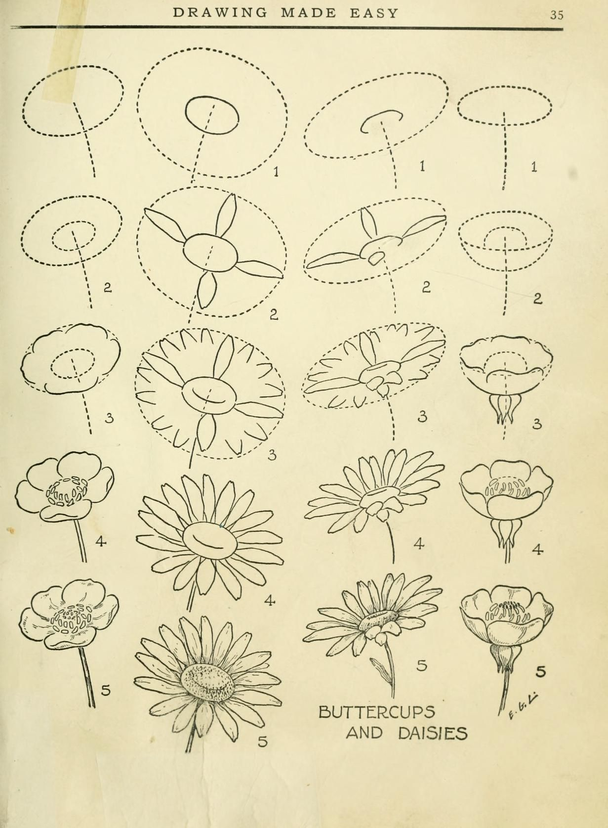 how to draw a dandelion kids org dandelions and tutorials