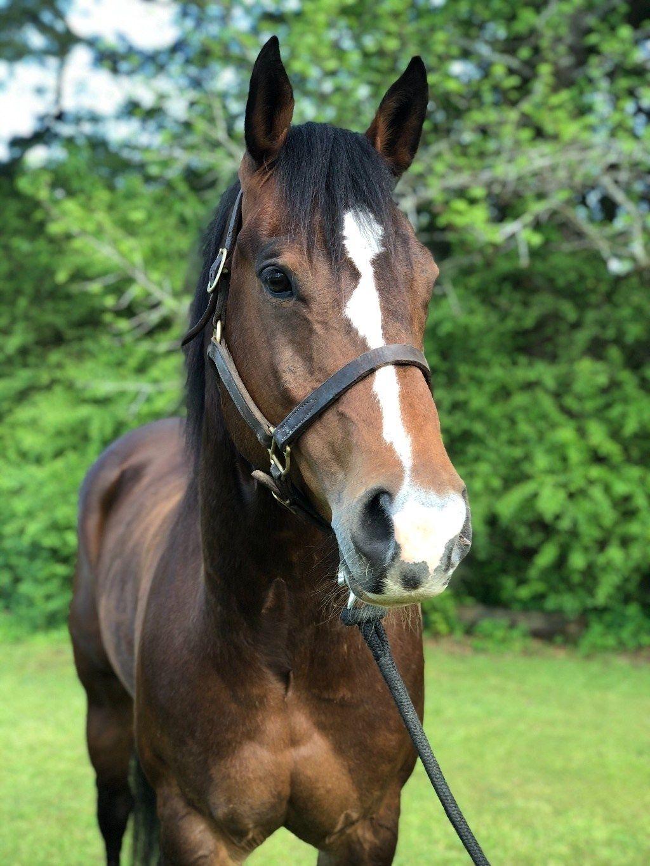 2D/3D Gelding in 2020 Gelding, Barrel horse, Horses