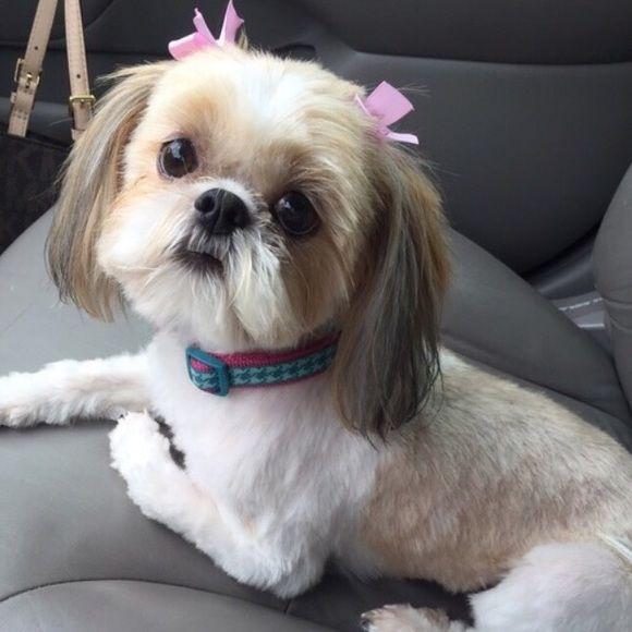 Im A Dog Mom Pinterest