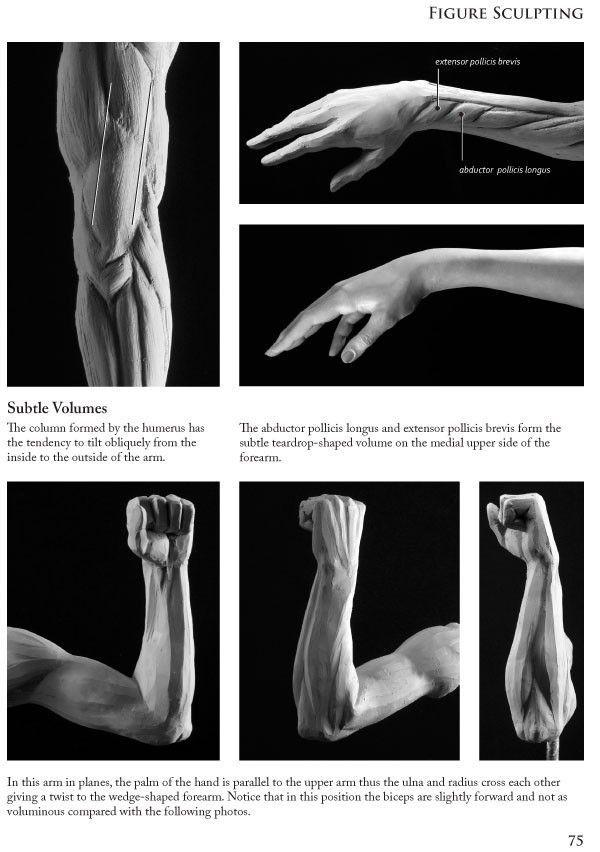 Pin de Alexander Ng en anatomy | Pinterest | Escultura