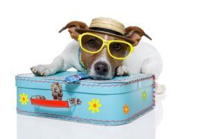 Where Will Fido Go On Vacation Stretcher Com Frugal Vacation